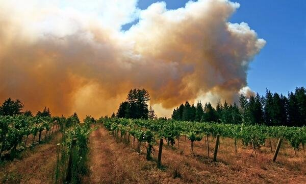 smoke in vinyard -Credit ETS Laboratiries